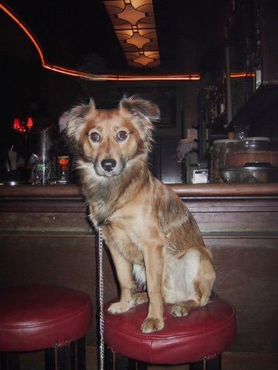 hond op barkruk